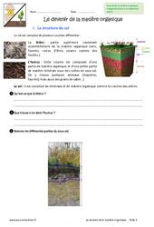 Devenir de la matière organique - 6ème - Exercices