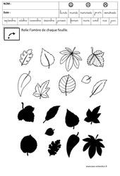 Observation – Retrouver l'ombre – Logique – Maternelle – Grande section – GS – Cycle 2