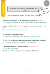 Orthographier correctement le pluriel des noms en -eau, -eu, -al et au – CM1 – Leçon